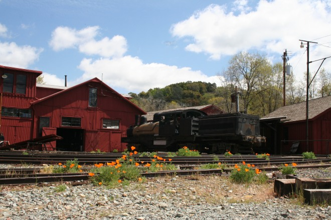 Wildflowers at Railtown Roundhouse